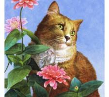 orange cat with zinnias