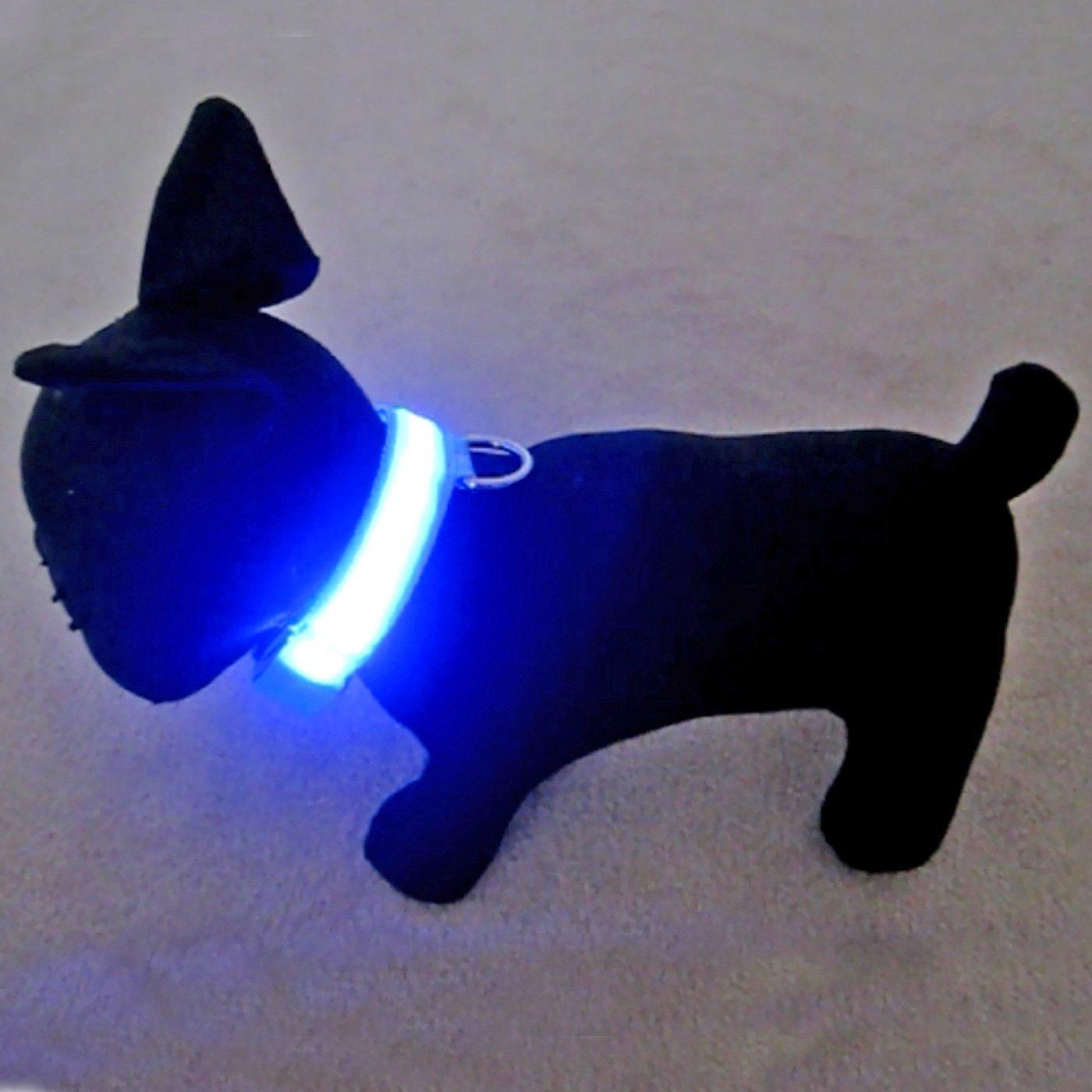Best Dog Collars With Lights Webnuggetz Com