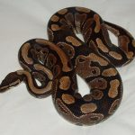 How to Care For a Snake Pet