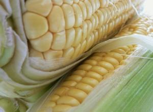 BBQ Corn on the Cob Recipe