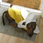 Best Dogs Costumes for Halloween