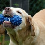 Great Dog Toys all Dogs love