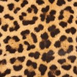 Fun And  Fabulous Faux Leopard Fur Coats