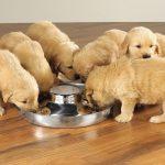 Puppy Feeding Bowls